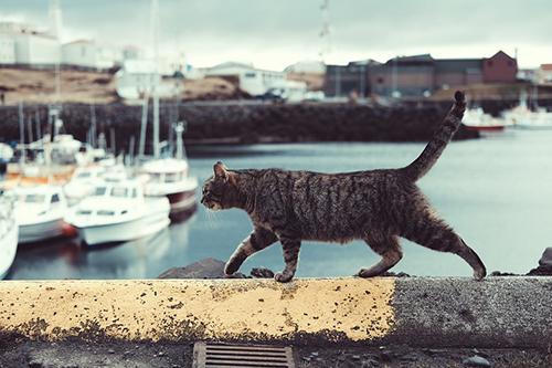 شركة صيد قطط بالرياض