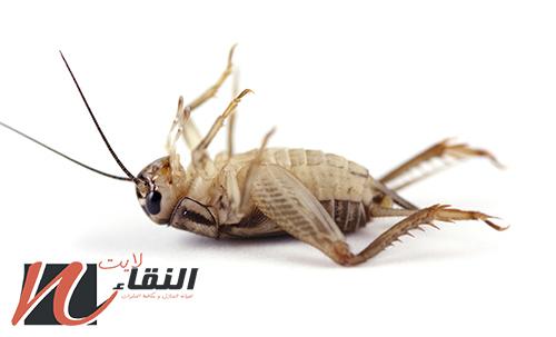 شركة رش الحشرات بجازان